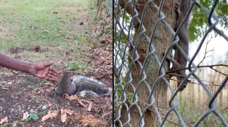 After Squirrel Stopped a Woman in the Woods, She Found It Was Asking Her to Help Its Injured Baby