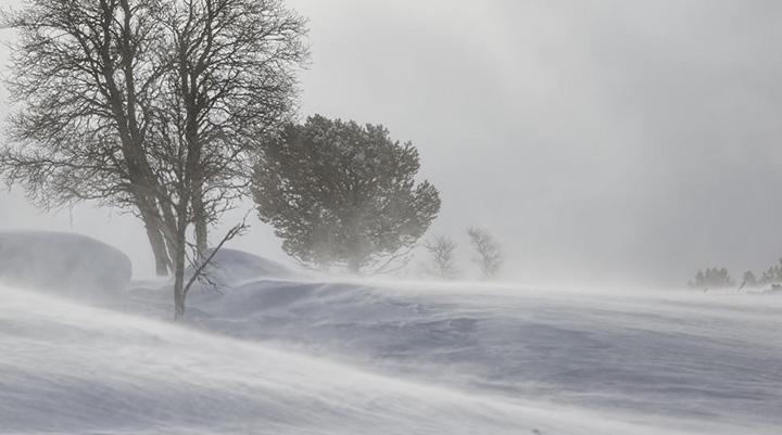 4 Children Lost In Alaska During A Blizzard Were Found Alive Huddling Around The 2-Year-Old