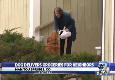 This Diligent Dog Has Been Delivering Groceries, Meals, and Mail to Senior Neighbor in Quarantine