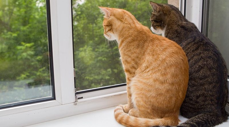 Scientists Are Asking People To Keep Their Pet Cats Inside Because Cats Are Murdering Everything